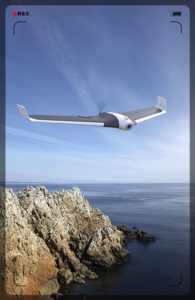 wonderful Parrot Disco FVP